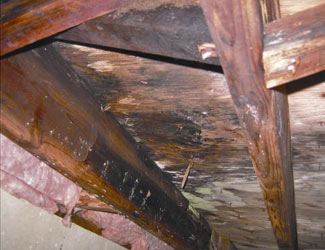 mold and rot in a Prince Albert crawl space